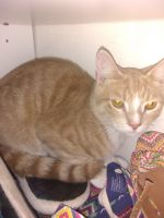 Other Cats for sale in Grouse Ln, West Newton, PA 15089, USA. price: NA