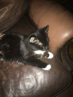 Other Cats for sale in Douglasville, GA, USA. price: NA