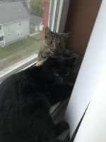 Other Cats for sale in 12600 Shaker Blvd, Cleveland, OH 44120, USA. price: NA