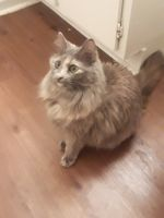 Other Cats for sale in Jonesboro, AR 72401, USA. price: NA