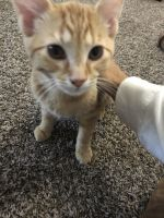 Other Cats for sale in Columbus, OH 43219, USA. price: NA