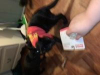Other Cats for sale in Wheaton, Wheaton-Glenmont, MD, USA. price: NA