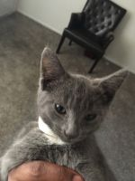 Other Cats for sale in 7840 Marty St, Overland Park, KS 66204, USA. price: NA