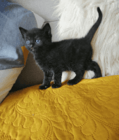 Other Cats for sale in Parsippany-troy Hills Township, NJ, USA. price: NA