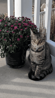 Other Cats for sale in Loveland, CO 80538, USA. price: NA