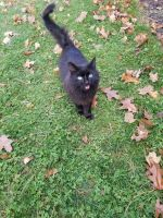 Other Cats for sale in Shipshewana, IN 46565, USA. price: NA