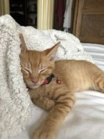 Other Cats for sale in Trenton, NJ, USA. price: NA
