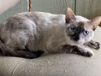 Other Cats for sale in San Antonio, TX, USA. price: NA