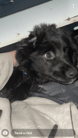 Other Puppies for sale in Oakes, ND 58474, USA. price: NA