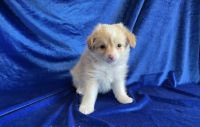 Other Puppies for sale in Los Angeles, CA, USA. price: NA