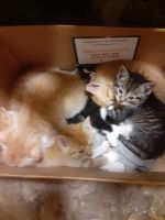 Other Cats for sale in Mexico, NY 13114, USA. price: NA