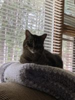 Other Cats for sale in Wausau, WI 54401, USA. price: NA
