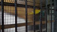 Parakeet Birds for sale in Florida Pkwy, Buena Ventura Lakes, FL 34743, USA. price: NA