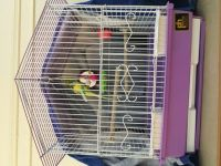 Parakeet Birds for sale in Brooklyn, NY, USA. price: NA