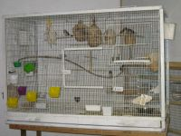 Parakeet Birds for sale in Chesterfield, New Baltimore, MI 48047, USA. price: NA