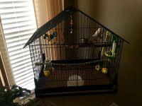 Parakeet Birds for sale in Donaldsonville, LA 70346, USA. price: NA
