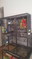 Parakeet Birds for sale in Columbus, OH, USA. price: NA