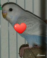 Parakeet Birds for sale in Palm Springs, CA, USA. price: NA