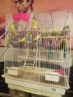 Parakeet Birds for sale in Schenectady, NY, USA. price: NA