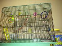 Parakeet Birds for sale in Shamokin, PA 17872, USA. price: NA
