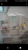 Parakeet Birds for sale in Philadelphia, PA, USA. price: NA