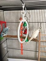 Parakeet Birds for sale in Mt Orab, OH, USA. price: NA