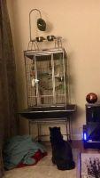 Parakeet Birds for sale in Seymour Johnson AFB, Goldsboro, NC 27531, USA. price: NA