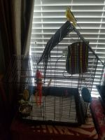 Parakeet Birds for sale in Winterville, NC 28590, USA. price: NA