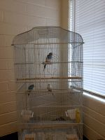 Parakeet Birds for sale in Phoenix, AZ, USA. price: NA