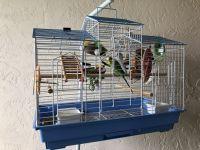 Parakeet Birds for sale in Margate, FL, USA. price: NA
