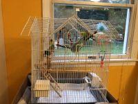 Parakeet Birds for sale in Edison, NJ 08820, USA. price: NA