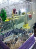 Parakeet Birds for sale in Kearns, UT 84118, USA. price: NA