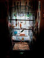 Parakeet Birds for sale in Vanceburg, KY 41179, USA. price: NA