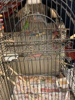 Parakeet Birds for sale in Sherman Oaks, Los Angeles, CA, USA. price: NA