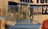 Parakeet Birds for sale in Rockville, MD, USA. price: NA