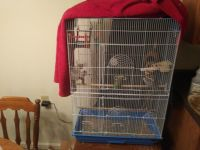Parakeet Birds for sale in Marshfield, MO 65706, USA. price: NA