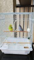 Parakeet Birds for sale in Austin, TX, USA. price: NA