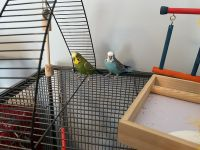 Parakeet Birds for sale in 72 Heritage Pkwy, Bluffton, SC 29910, USA. price: NA