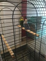 Parakeet Birds for sale in Corona, Queens, NY, USA. price: NA