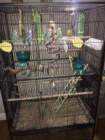 Parakeet Birds Photos