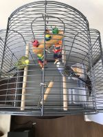 Parakeet Birds for sale in Stamford, CT, USA. price: NA