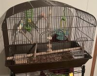 Parakeet Birds for sale in Cleburne, TX 76033, USA. price: NA