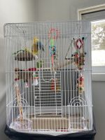 Parakeet Birds for sale in Mifflinburg, PA 17844, USA. price: NA