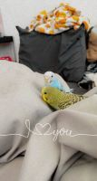 Parakeet Birds for sale in Worcester, MA, USA. price: NA
