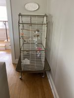 Parakeet Birds for sale in Greensburg, PA 15601, USA. price: NA