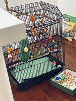 Parakeet Birds for sale in Harrison, NJ, USA. price: NA