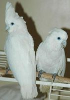 Parrot Birds for sale in Long Beach, CA, USA. price: NA