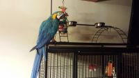 Parrot Birds for sale in Ann Arbor, MI, USA. price: NA