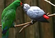 Parrot Birds for sale in Birmingham, AL, USA. price: NA