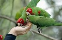 Parrot Birds for sale in Bridgeville, DE 19933, USA. price: NA